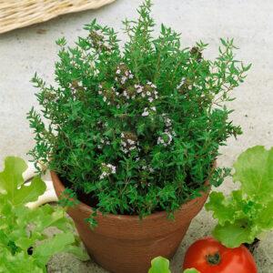Gyógy- és Fűszernövények hobbi vetőmagok