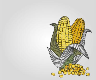 Fooldal-kepek-kukorica